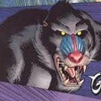Igor the baboon