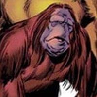 Peotr the orangutan